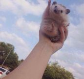 Hedgehog Believes In You