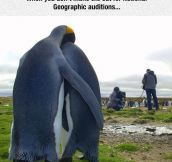 This Is The Saddest I've Ever Felt For Penguins