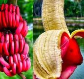 And Now You Know That These Bananas Exist