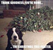 Every Dog On Christmas