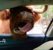 Safari Animals Coming On WAY Too Strong… (21 Pics)