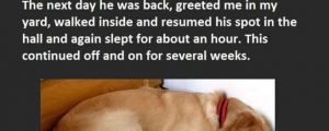 Best Letter Ever Found On A Dog's Collar. This Is Priceless.