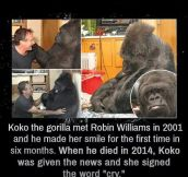 Not Only Humans Miss Robin Williams