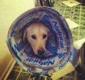 20 Pets ROCKING The Cone Of Shame…