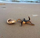 A Live Starfish On The Beach