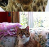 These Are My Spirit Animals