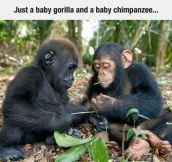Two Beautiful Babies