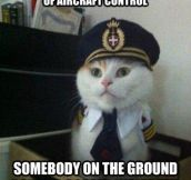 Captain Cat Got Distracted For A Second