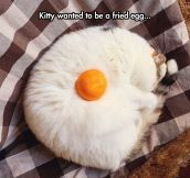 Fried Egg Cat