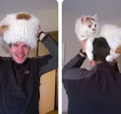 Dr. Seuss' The Cat Is A Hat