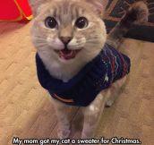 This Cat Has Christmas Spirit