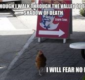 Bravest Chicken Ever