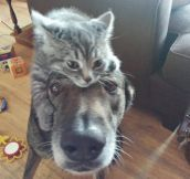 When Pets Love Each Other