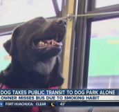 A Strong, Independent Black Dog Who Don't Need No Man