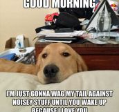 Dog's Love In The Morning