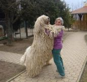 That's A Really Big Mop