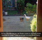 Skippy And Henry