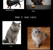 How We See Our Pets