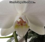 Orchids Have The Coolest Shapes