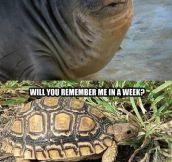 It Was Just A Joke, Turtle