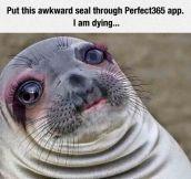 Awkward Glamour Seal