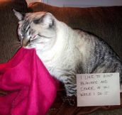 The Best of Cat Shaming – Part 13 (17 pics)