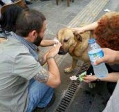 Helping Man's Best Friend