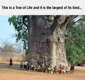 Majestic Tree Of Life