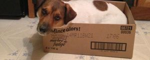 15 Dogs Who Think They're Cats