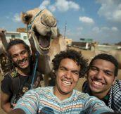 Best Camel Selfie Ever