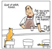 A Cat Walks Into A Bar