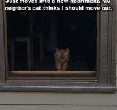 Neighbor Cat Isn't Happy