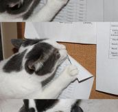 More Proof Cats Are Jerks
