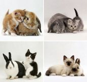 Cat And Rabbit Look Alikes
