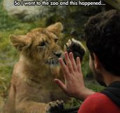 Lion Wants A Friend