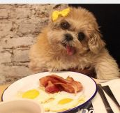 Bacon And Eggs Is Definitely The Best Date