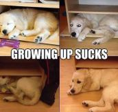 One Of The Many Downsides Of Growing Up