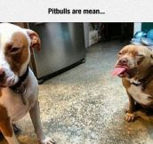 That's Not Nice, Pitbull