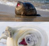 ROFL Seals Compilation