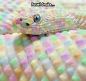 Beautiful Reptile Skin