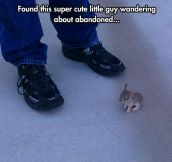 That Bunny Is So Tiny