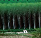MAN MADE FOREST – TREE FARM.
