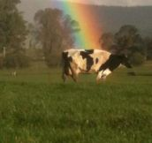 What's Really At The End Of The Rainbow…(18 Pics)