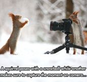 But Which Squirrel Took This Picture?