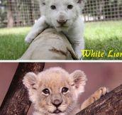 Feline Babies