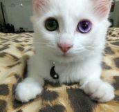 That Eye Color