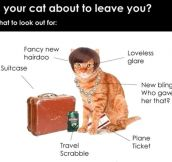 Is Your Cat Getting Ready To Leave You?