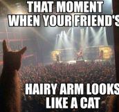 Feline Arm
