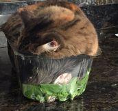 Cozy Salad