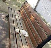 Tiny Nap